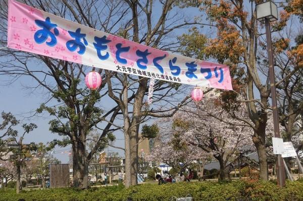 大元公園でお花見